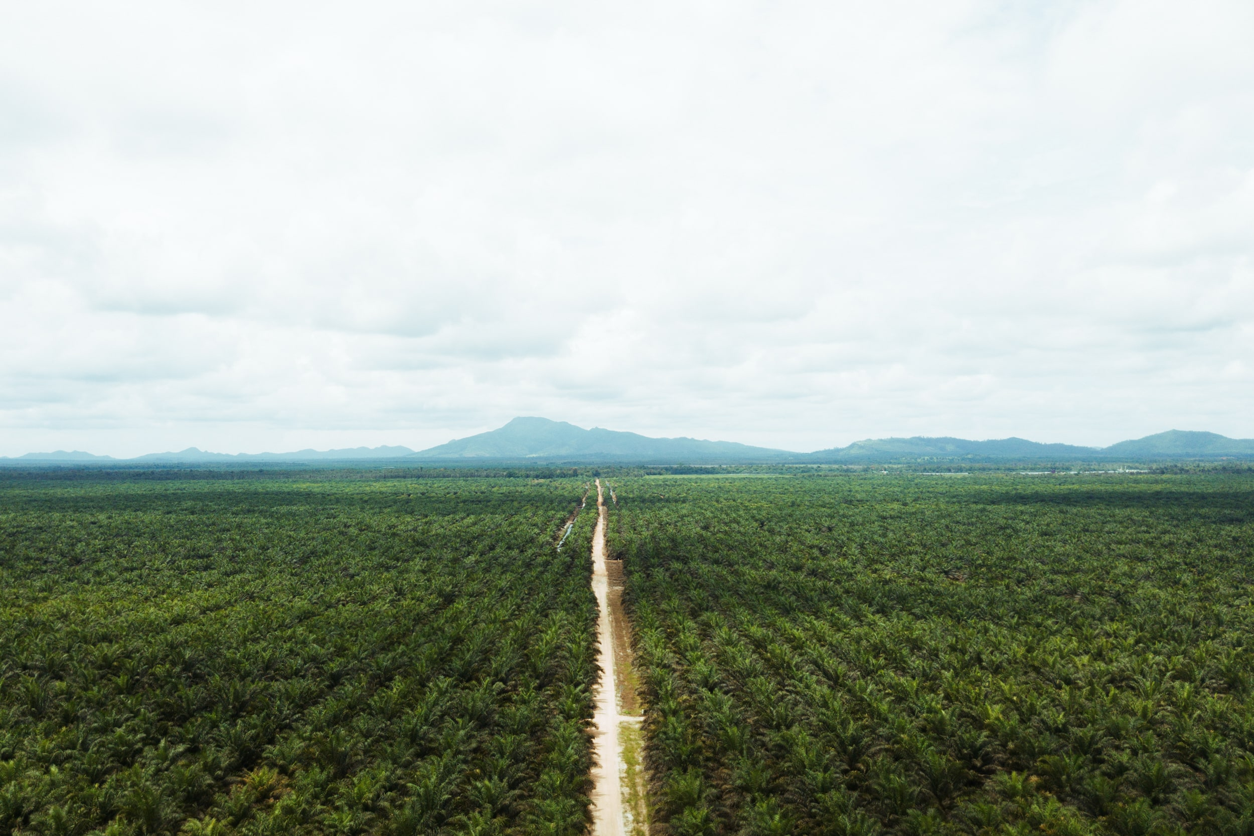 Cargill expands segregated sustainable palm oil capacity in North America