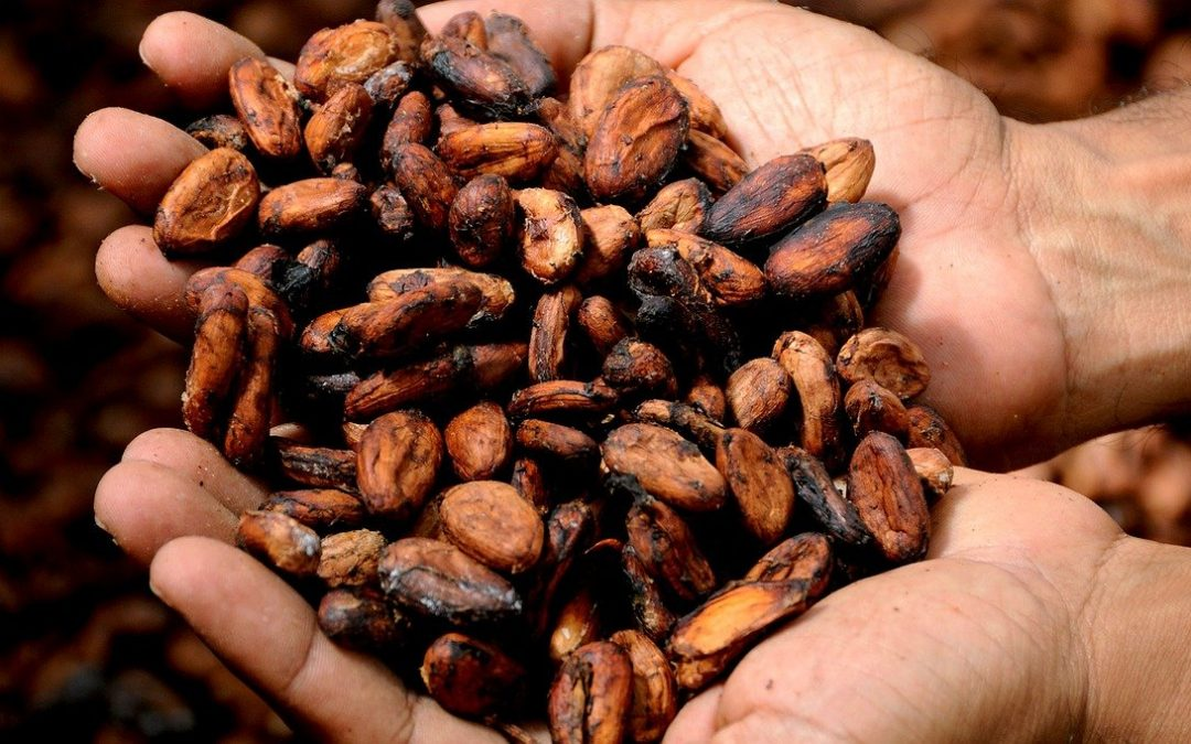 Cocoa Barometer report addresses challenges in the cocoa sector