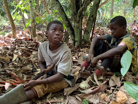 Child labour case against cocoa giants begins