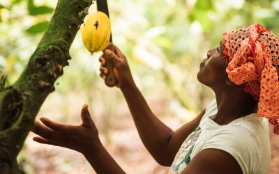 Fairtrade calls for EU to back living incomes in African supply chains