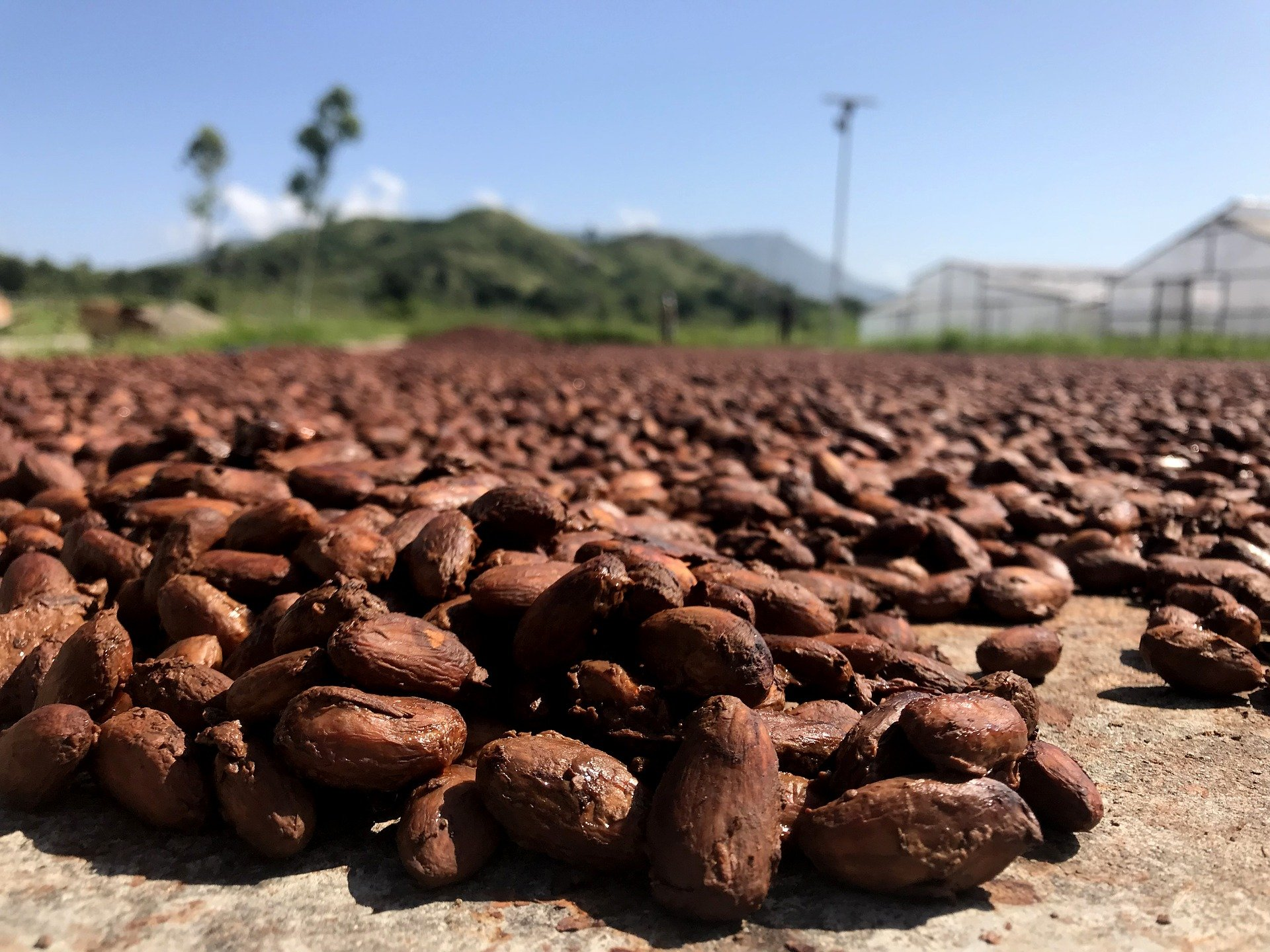 Mondelēz and Olam team up to create world's largest sustainable cocoa farm