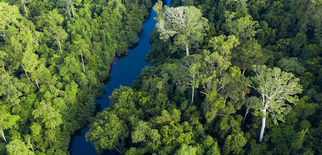 Nestlé  to support restoration of forest landscapes in Asia